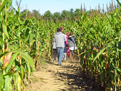 CP_Pen_students_corn_maze_walking_in_100517_ML