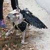 WP_pug_parade_bat_101917_ML