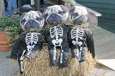 WP_pug_parade_skelatons_101917_ML