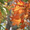 CP_fall_scenics_sunlight_orange_three_091417_AB