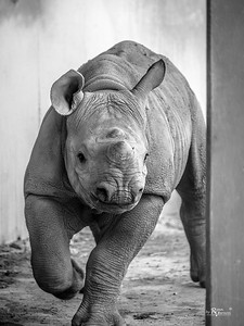Blank Park Zoo - Tumani
