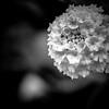 Botanical-3250326-20170325