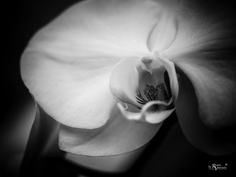 Botanical-3250007-20170325