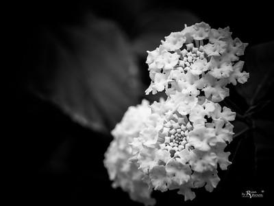 Botanical-3250323-20170325
