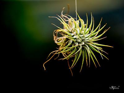 Botanical-3250291-20170325