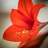 Botanical-3250099-20170325