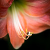 Botanical-3250353-20170325