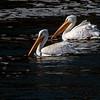 Fall Wildlife at Saylorville