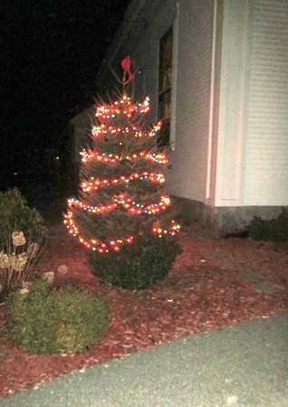 wp_bklin_tree_light_tree_120618_js
