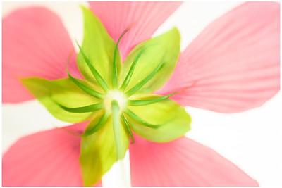 Pastel Hibiscus