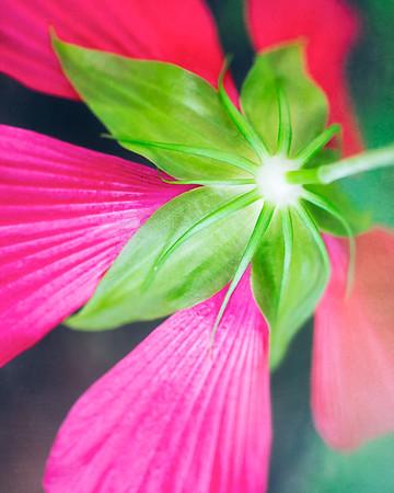 """Hibiscus Blossom Bottom"""