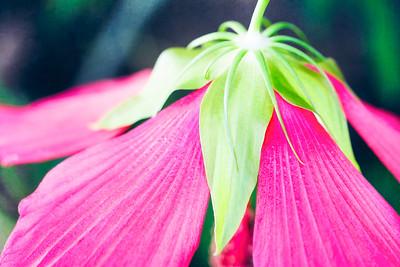 Hibiscus Hat