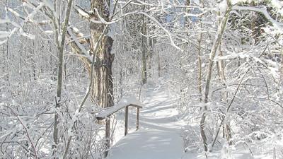 CP_scenics_snowy_trail_031518_AB