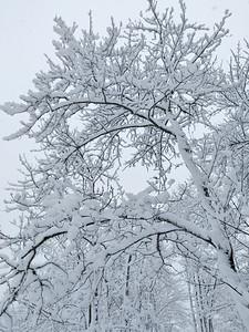 WP_Snow_Storm_Trees_031518_JS