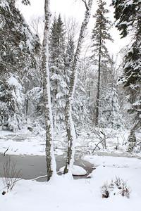 IA_snow_photos_woods_041119_ML