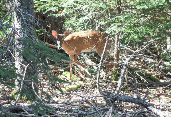 IA_hike_deer_082219_ML