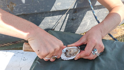 AP_Fresh_from_the_Sea_shucking_080119_TO