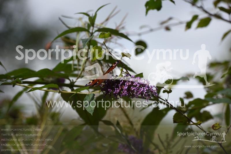 SportpicturesCymru - 5013 - SPC_4510