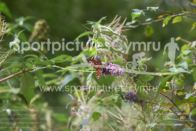 SportpicturesCymru - 5012 - SPC_4509