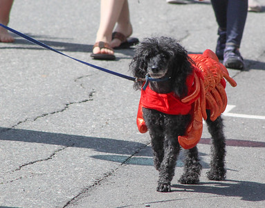 CP_Castine_4th_of_July_lobster_dog_071119_ML