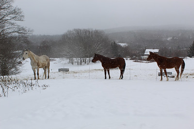 WP_equine_rescue_3_in_snow_022819_AB