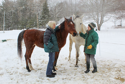 WP_equine_rescue_two_horses__022819_AB