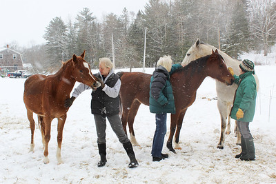 WP_equine_rescue_everyone_three__022819_AB