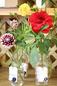WP_BHF_flowers_DAHLIAS_090519_AB