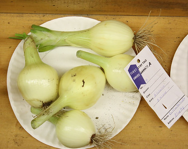 WP_BHF_ex_hall_blue_hill_onions_090519_AB