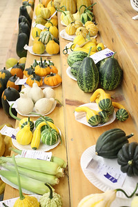 WP_BHF_ex_hall_many_gourds_090519_AB