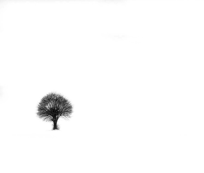 Section A - Projected - Highly Commended - Lone Tree by Jeanne Goodridge