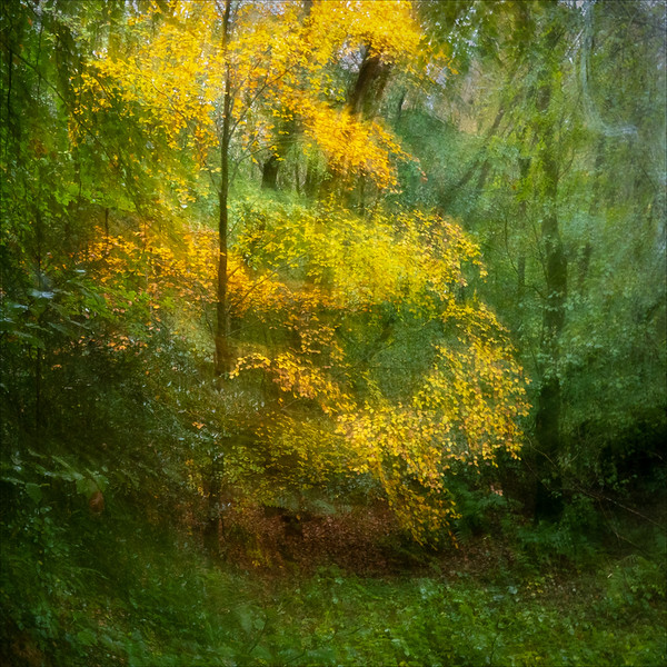 Section A - Highly Commended - Autumn Impression by Carol Tritton