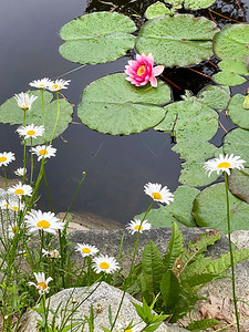 CP_summer_scenics_lily_pads_080620_RW