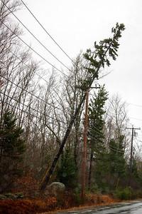 CP_storm_photos_tree_on_power_line_120320_RW