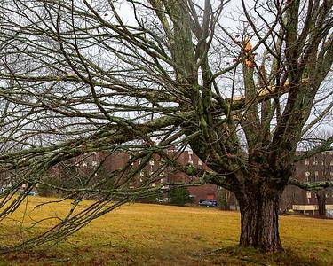 CP_storm_photos_split_tree_#2_120320_RW