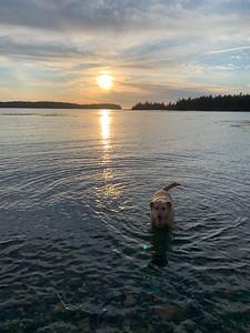 IA_scenic_dog_sand_beach_030520_TM