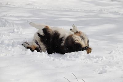 WP_snow_scenics_dog_110520_EF