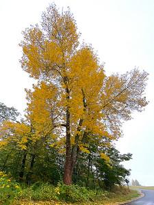 CP_autumn_scenics_Autumn_Gold_100120_RW