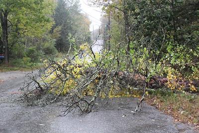 IA_Wind_Storm_Tree_100120