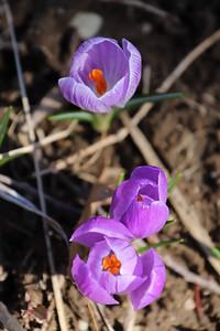 WP_flowers_041821_EF