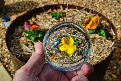 Lensball Flower