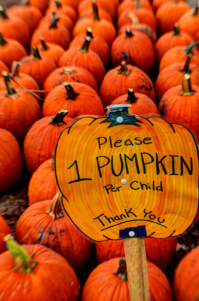 One pumpkin per child please
