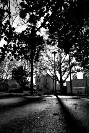 [365.128] The Trees Cast Long Shadows <i>Alameda, California — May 8, 2009</i>  An evening scene in the park next to our house -- the trees (and light posts) cast long shadows in the light of the setting sun.   © Brendan Cox — All Rights Reserved