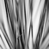 [365.078] Convergence <i>Alameda, California — March 19, 2009</i>  A closer look at a cluster of dried grasses we have in a vase.  © Brendan Cox — All Rights Reserved