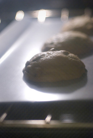 [365.015] Cookies! <i>Alameda, California — January 15, 2009</i>  Cookies I made from scratch, as seen through the oven door! They actually turned out ok too. Chocolate chip cookies make me happy. :D  © Brendan Cox — All Rights Reserved