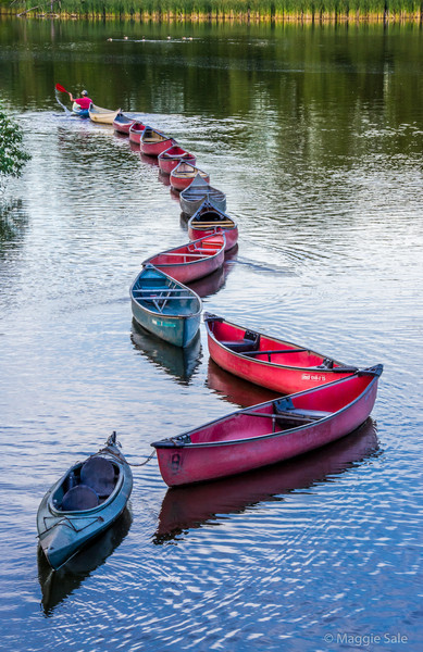 "The ""train""  of canoe rentals leaving the dock on the Speed River, Guelph. They are being towed to their overnight spot upstream."