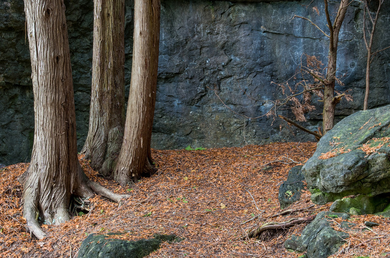Rocks and cedar trees at Rockwood Conservation Area taken during a photo outing with friends.