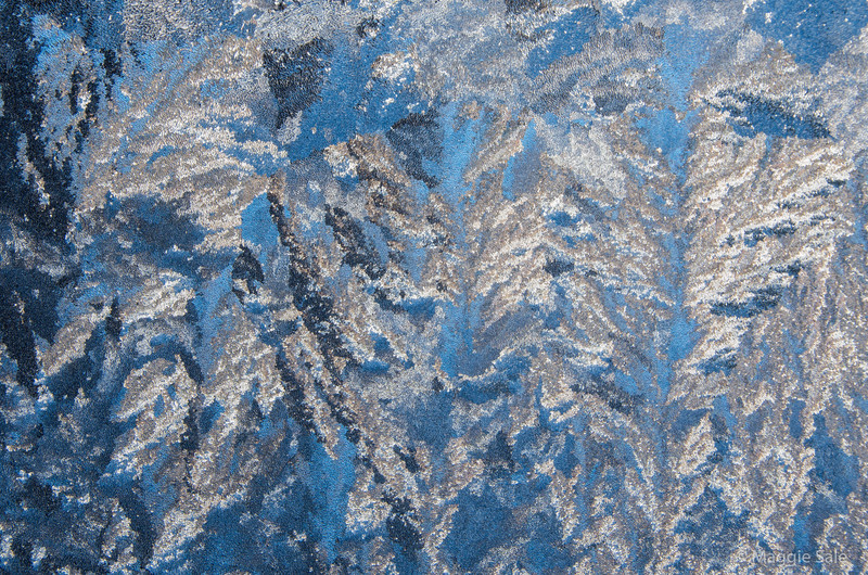 Frost pattern on our porch door during a very cold spell early in the week. The blue sky behind was a bonus!
