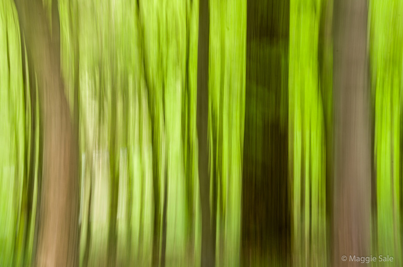 "On a  visit to Strid Wood in Wharfdale, Yorkshire I took many shots of the beautiful beech trees - with their fresh bright green leaves - a motion picture gave me this ""smeared"" effect with two beech and two conifers in the foreground and successive layers in the background."