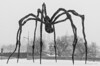 "The ""Maman"" sculpture by Louise Bourgeois, outside the National Gallery in Ottawa, during the raging snowstorm on Feb. 8!"